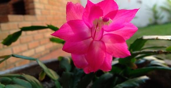 flor.de